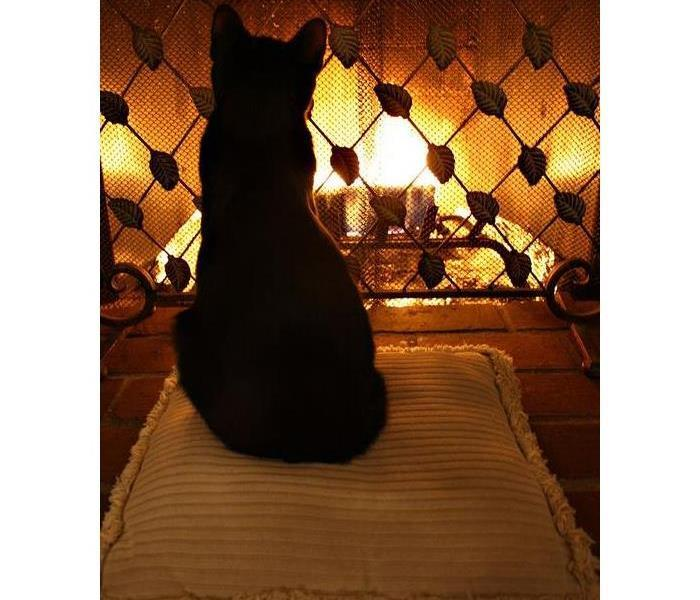 cat sitting on pillow, fireplace